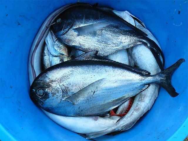 الأسماك : الفرق بين المنتجات الطبيعية والمصنعة