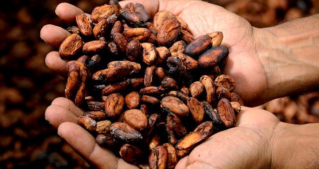 فوائد حبوب الكاكاو