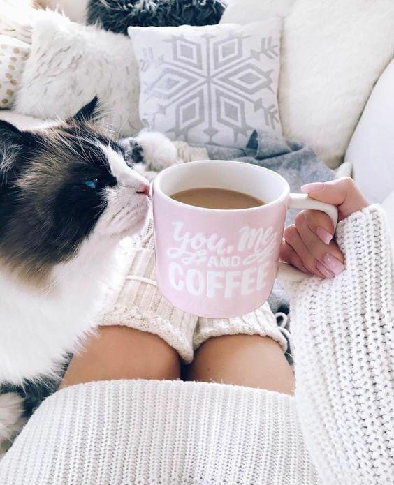 القط القهوة في اليد
