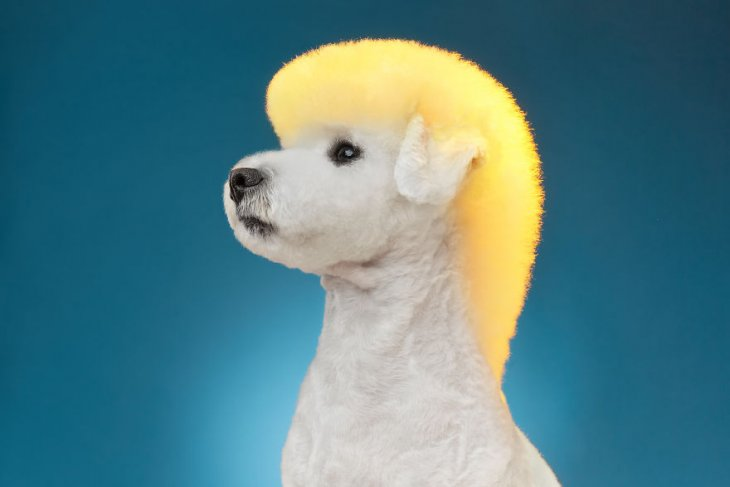 صور كلب مع حلاقة جميلة