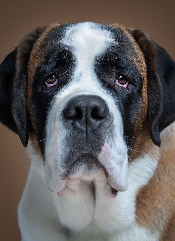 صورة كلب 2020