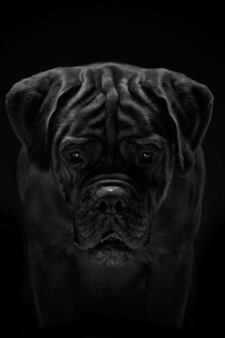 صورة كلب أسود حزين