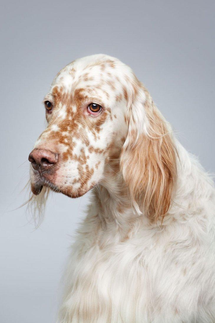 صورة كلبة جميلة