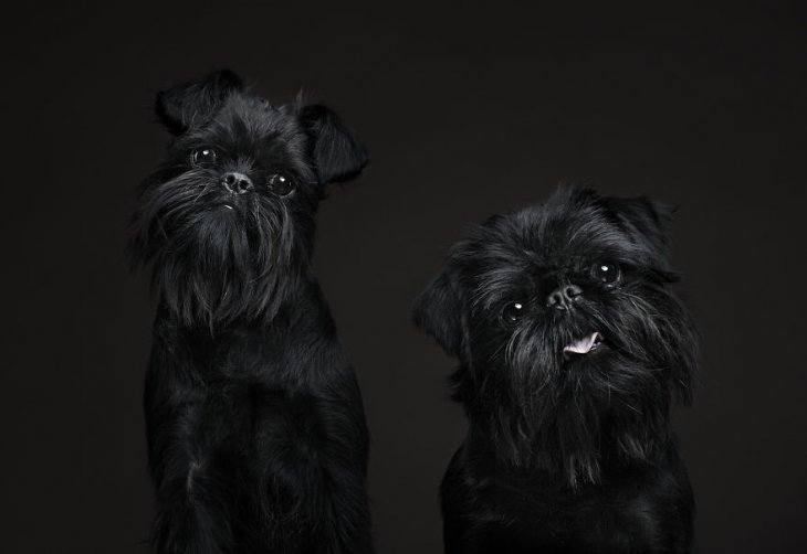 صورة كلاب