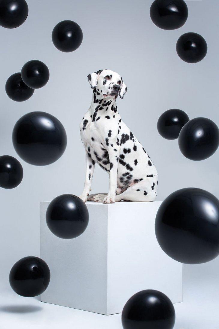 صورة رائعة لكلبة