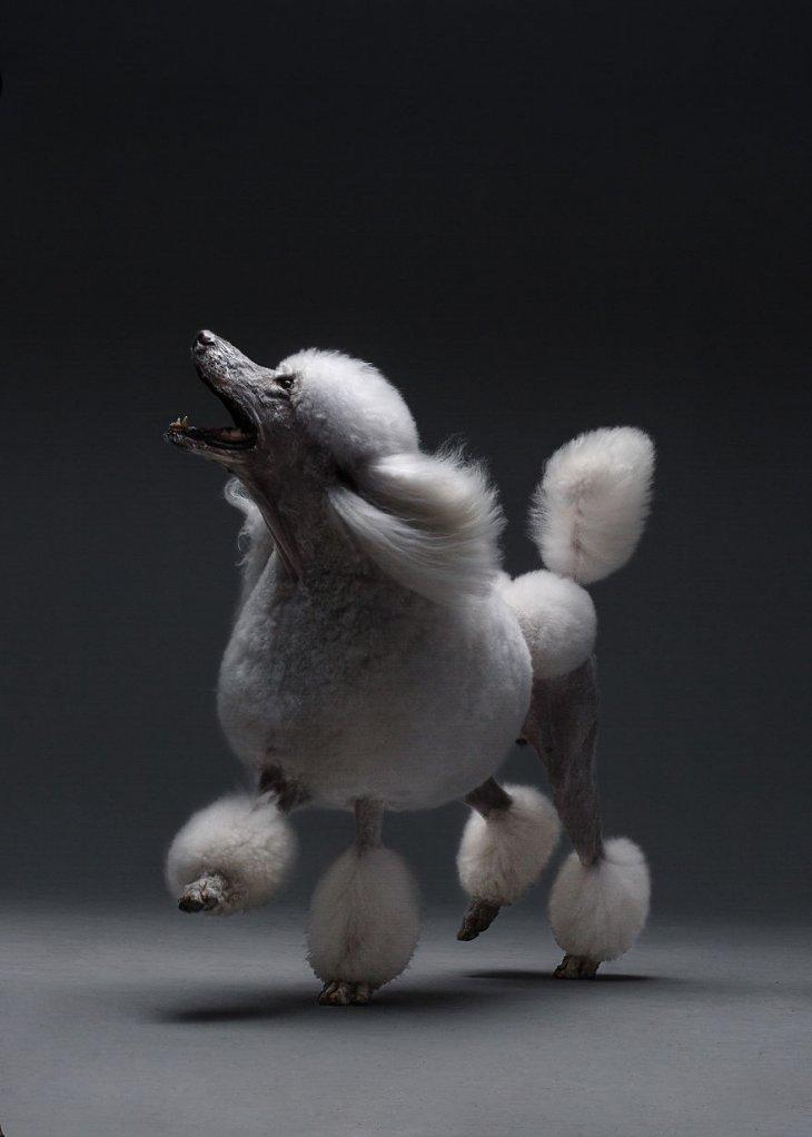 صورة كلبة موديل