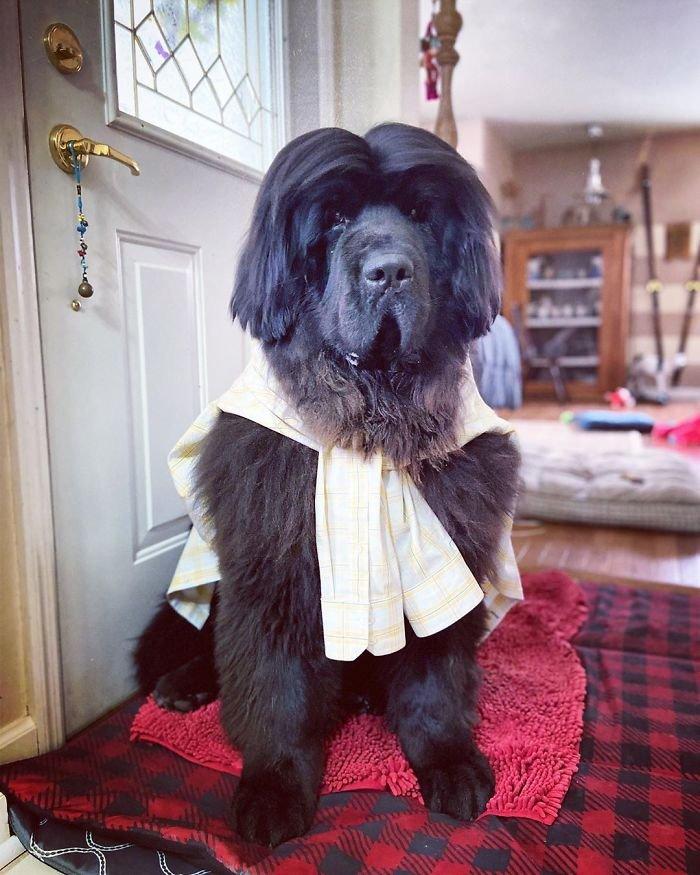 صور تصفيفات شعر  كلاب 2020
